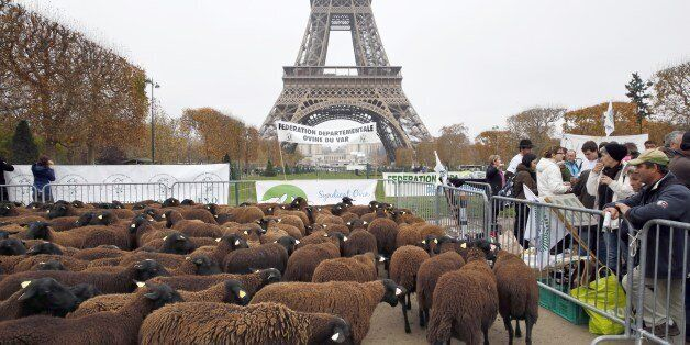 Sheep stand at the Champ de Mars near the Eiffel Tower in Paris during a protest by farmers demanding...