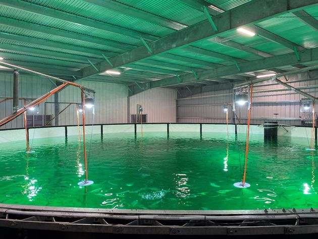 Tanks inside Atlantic Sapphire's Miami-based salmon farm. The water comes from the Floridan