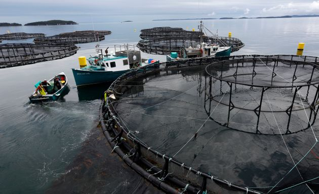 A salmon farm near Blacks Harbour, New Brunswick,