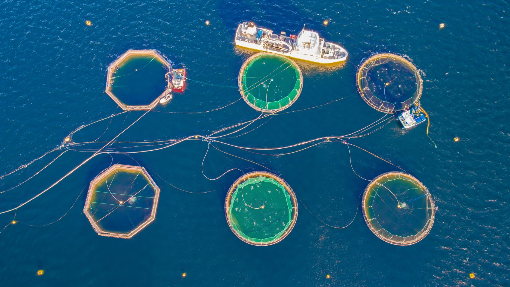 We Know Factory Farming Is Terrible, But What About Farmed Fish?