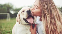 Vita da cani: quando l'affido è a
