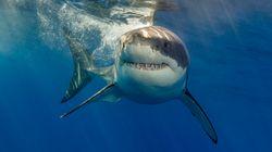 Des paléontologues découvrent des fossiles de requins au