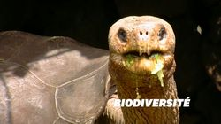 30 tortues géantes issues d'espèces disparues ont été découvertes aux îles
