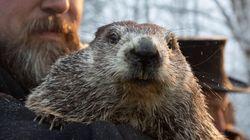 Les marmottes ne s'entendent pas sur l'arrivée hâtive du