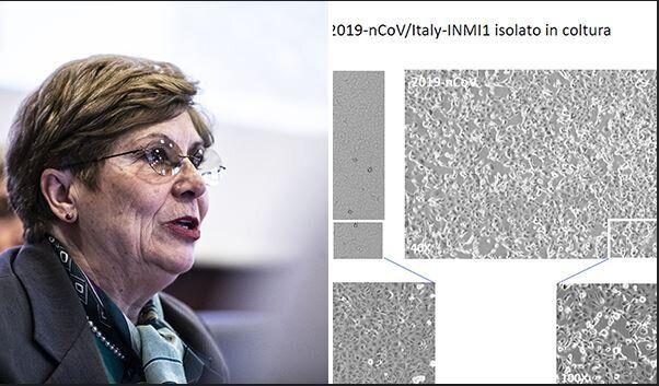 Nella foto la direttrice del laboratorio di Virologia dello Spallanzani Maria Capobianchi, che ha isolato...