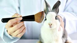Des États américains bannissent les cosmétiques testés sur des