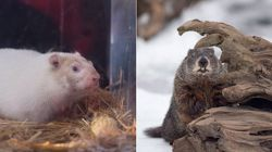 Battle Of The Groundhogs: Who Got It Right In