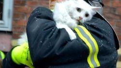 Un gato rescatado de un incendio y otros bichinos de la semana