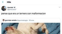 El efecto óptico que vuelve locos a todos en Twitter: es un perro, pero te llevará minutos