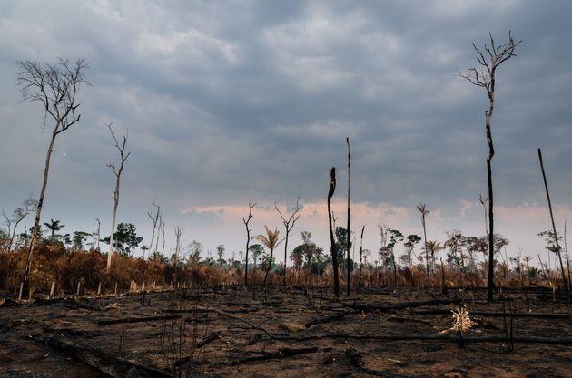 Em 2019, a área com alertas de desmatamento aumentou 85,3%, na comparação com o...