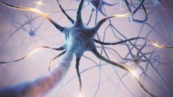 Las neuronas comunican con los tumores cerebrales