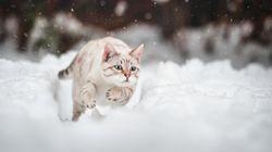 오늘 퇴근길, 드디어 눈이 내린다는