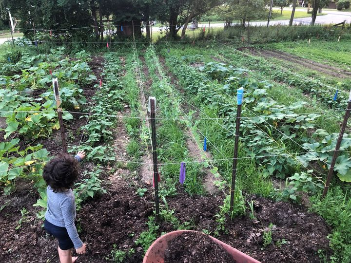 Thousands Of People Are Growing 'Climate Victory Gardens' To Save The Planet