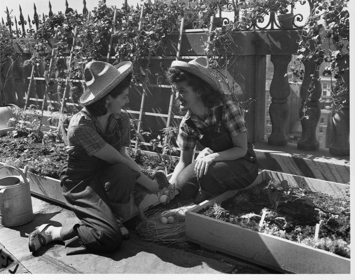 Two women from Mount Holyoke College in Massachusetts tend a World War II victory garden.