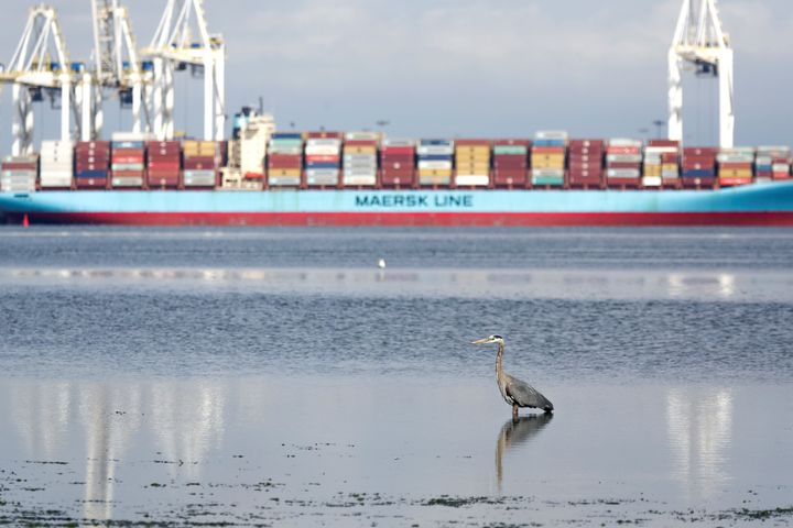 A heron hunts for food as the ship Anna Maersk is docked at Roberts Bank port carrying 69 containers of mostly paper and plastic waste returned by the Philippines in Vancouver on June 29, 2019.