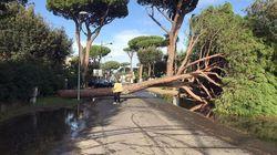 Gli alberi in città vanno aumentati e ben tenuti, non