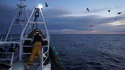 Guernesey a délivré aux navires de pêche français les premières autorisations