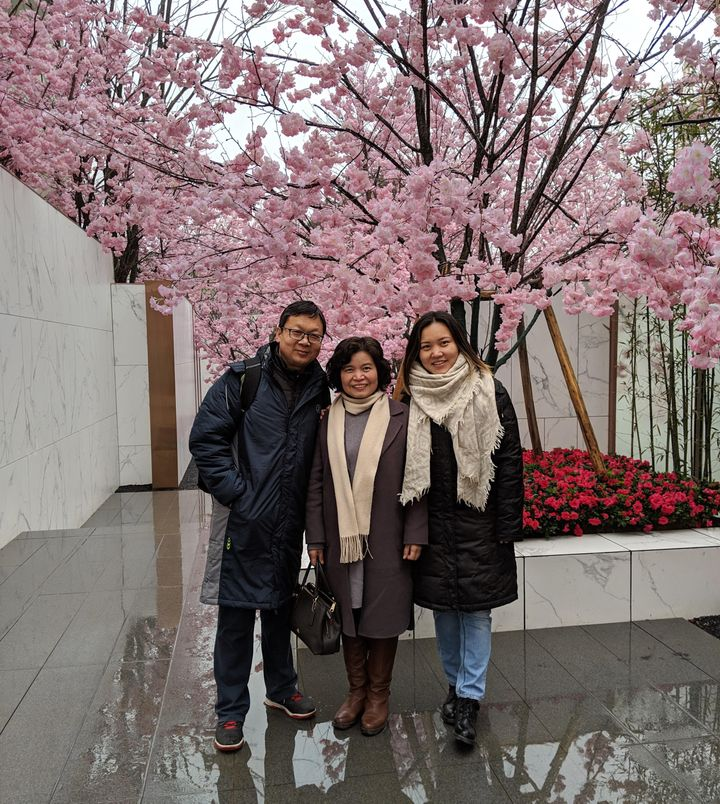 The cherry blossoms in my hometown are one of my fondest memories.