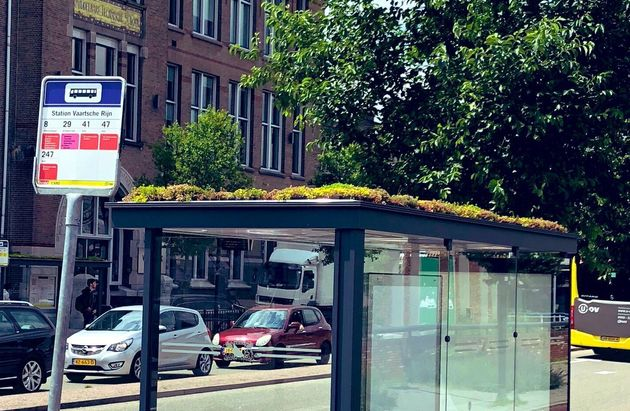In Utrecht, Netherlands, bus stops have green roofs to attract