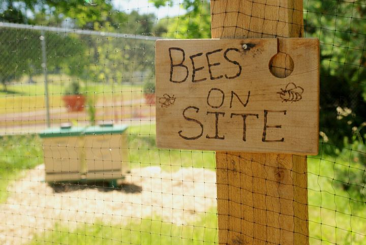 There are dozens of apps where the public can record their bee sightings.