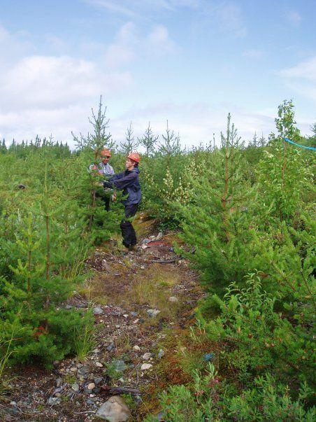 La Chaire en éco-conseil de l'UQAC gère Carbone boréal, un programme de compensation par plantation d'arbres qui sert également à la recherche universitaire. (Marianne Gagnon-Duchesne/Carbone boréal)