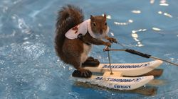 Water-Skiing Squirrel Illegally Shredding Waves In