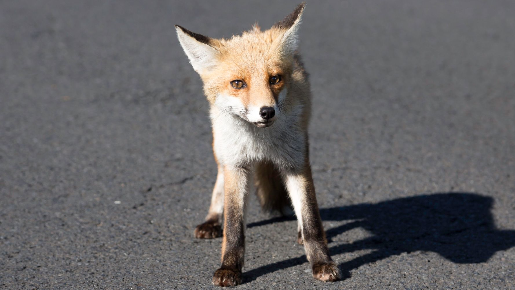 Fox Sneaks Into UK Parliament, Shows Lawmakers What It Thinks Of Them