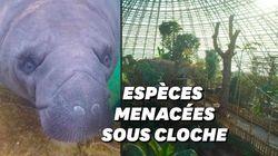 Au zoo de Beauval, la plus grande jungle de France ouvre ses portes et abrite 200 espèces