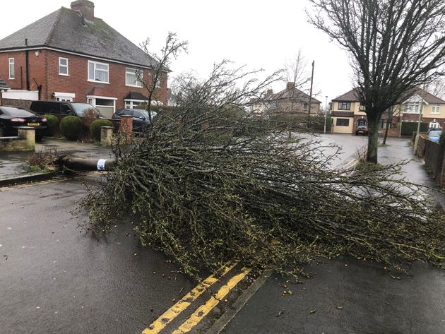 A fallen tree in the Longlevens area of