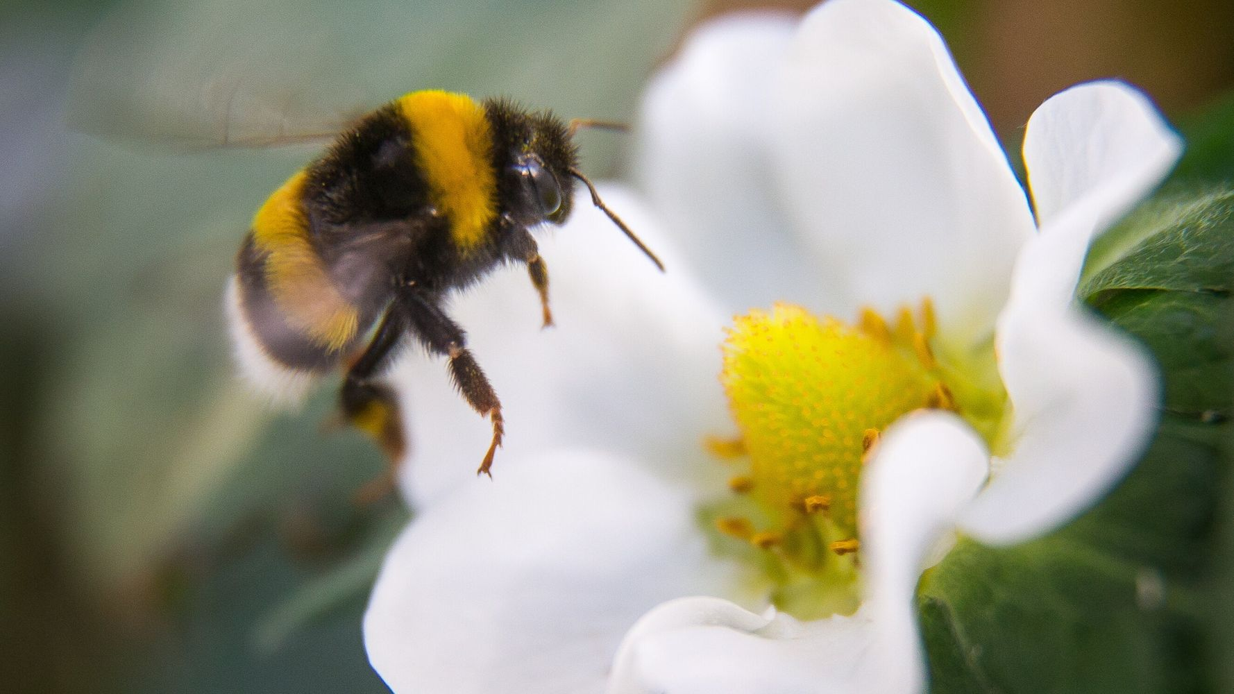 The Climate Crisis Is Threatening Bees. Here's What's Helping To Save Them.