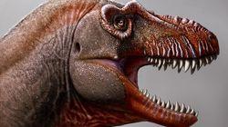 Un lointain cousin du T-Rex découvert au