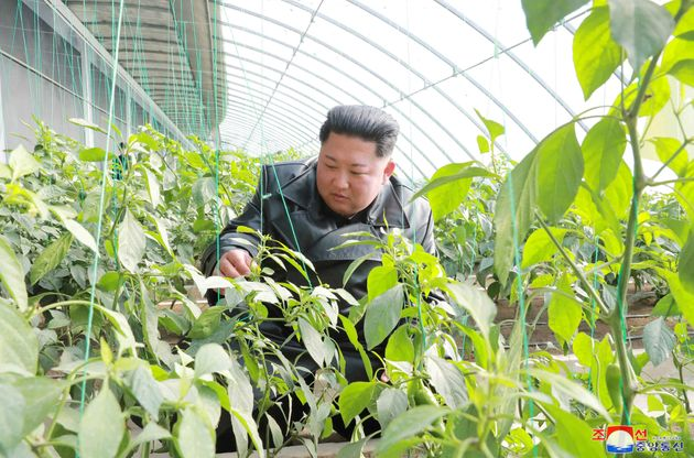 North Korean leader Kim Jong Un visits a vegetable greenhouse farm and tree nursery in Jungphyong area...