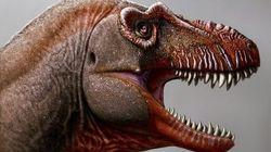 Un nouveau dinosaure, lointain cousin du T-Rex, découvert au