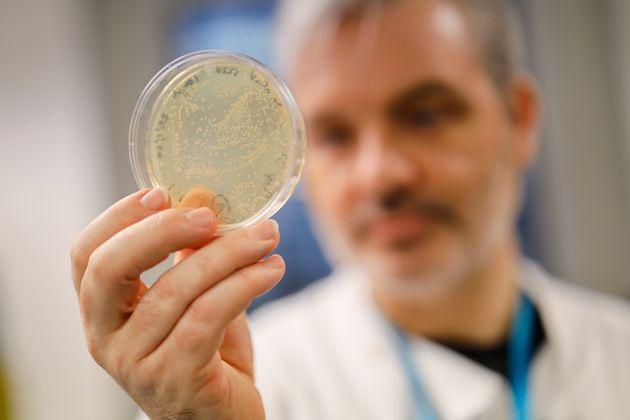 Ce chercheur britannique tient dans sa main des bactéries contenant le nouveau coronavirus, appelé...