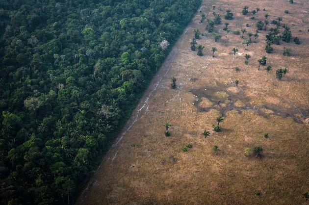 Τμήμα του Αμαζονίου εκπέμπει περισσότερο διοξείδιο του άνθρακα απ' όσο