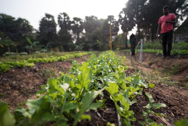 Smart Irrigation Scheme Cuts Water Use And Boosts Crop Yields –