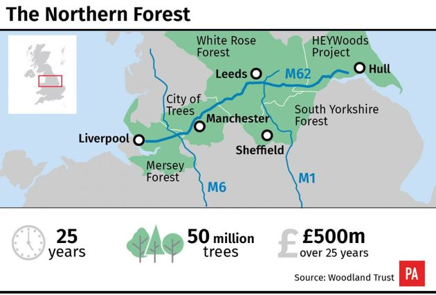 Millions Of Trees Set To Be Planted To Create 'Northern