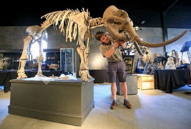 Mammoth Sale! Four Skeletons Tipped To Make Up To