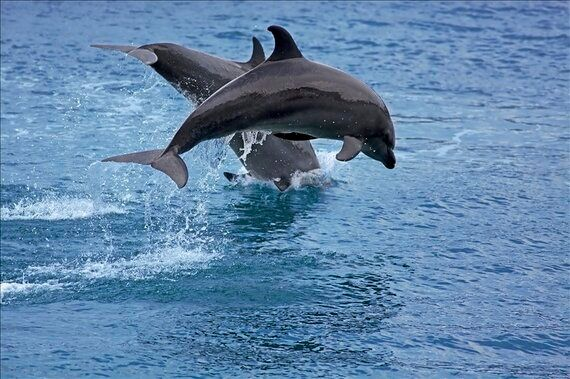 Taiji Culture, Tradition or