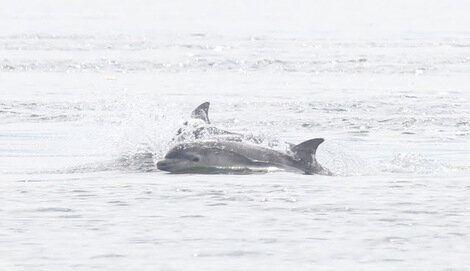 Cetaceans, Captures, Culture and Celebration in