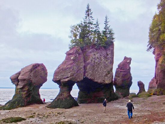 Planet Appetite: A Whale of a Time, Bay of Fundy, New Brunswick,