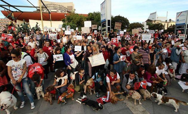 Romanian Stray Dogs: It Ain't Over 'Till It's