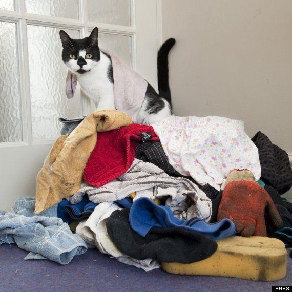 Meet Real-Life Cat Burglar, Denis The Menace (VIDEO,