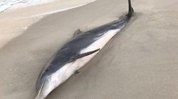 Επικήρυξη με αμοιβή 20.000 δολαρίων για τους δολοφόνους δελφινιών στην
