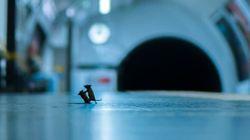 Ce combat de souris sur un quai de métro élu meilleure photo animalière du