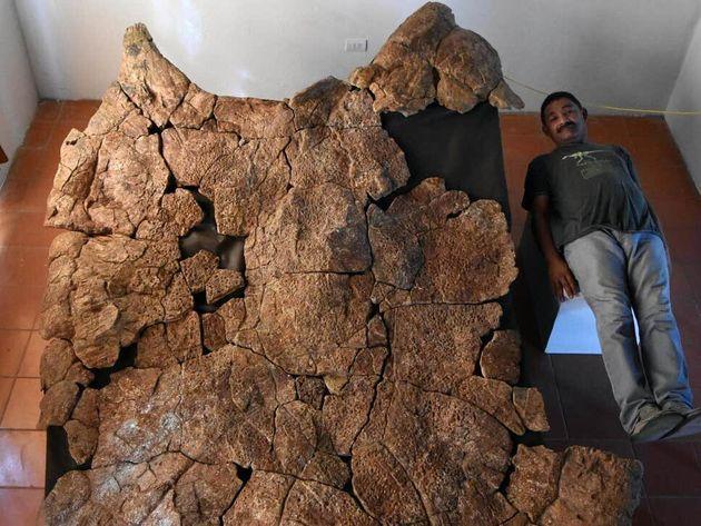 Βρέθηκαν απολιθώματα γιγάντιας χελώνας του γλυκού νερού που είχε μέγεθος