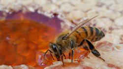 Ces chercheurs ont décodé les danses d'abeilles et cela pourrait les
