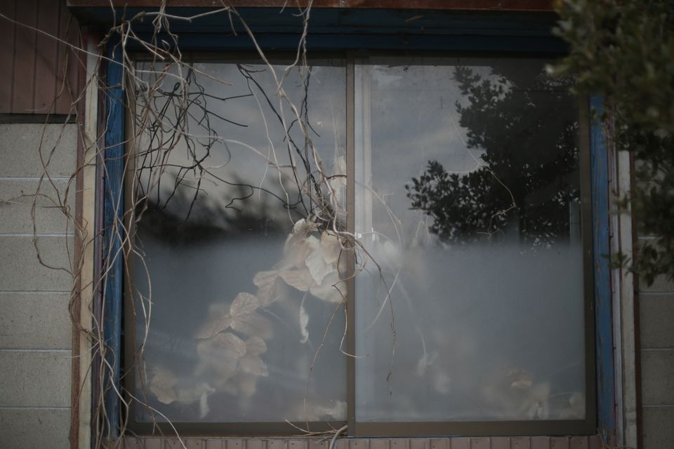 Nature is taking over buildings inside the radiation contamination exclusion zone around the devastated...