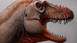 New Tyrannosaur Species Discovered In Southern