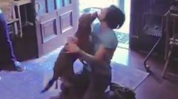 NASA Astronaut Reunites With Her Dog After 328 Days In